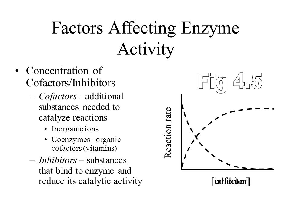 Factors Affecting Enzyme Activity Concentration of Enzyme –  Enzyme,  Rate Concentration of Substrate –  Substrate,  Rate –  in rate limited by a