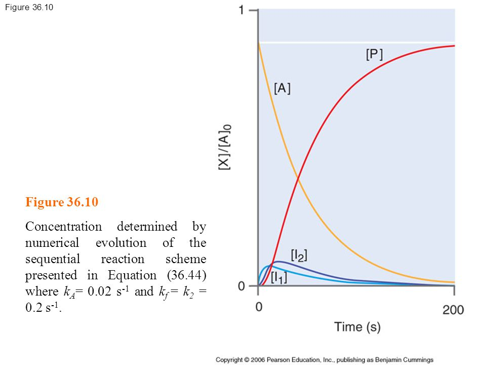 Figure 36.10 Concentration determined by numerical evolution of the sequential reaction scheme presented in Equation (36.44) where k A = 0.02 s -1 and k f = k 2 = 0.2 s -1.