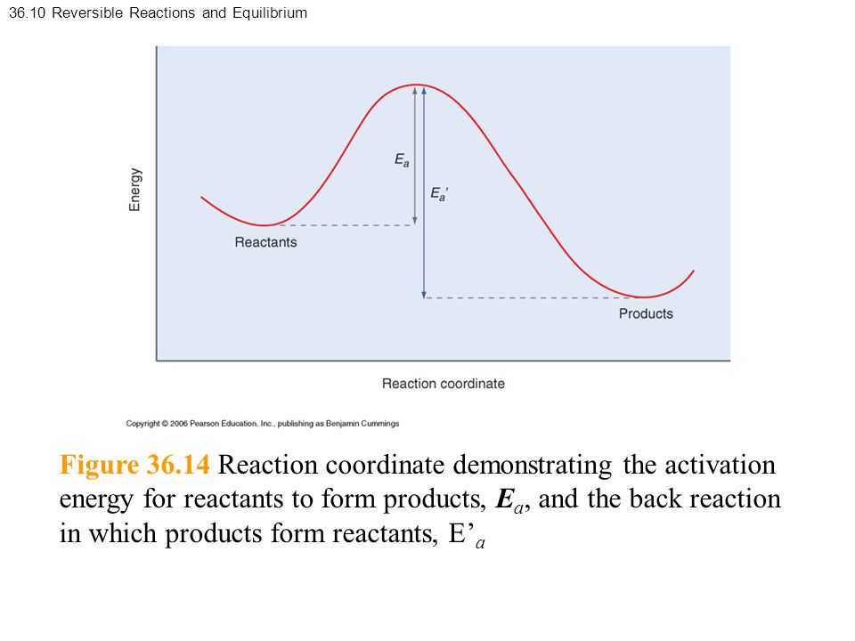 36.10 Reversible Reactions and Equilibrium Figure 36.14 Reaction coordinate demonstrating the activation energy for reactants to form products, E a, and the back reaction in which products form reactants, E' a