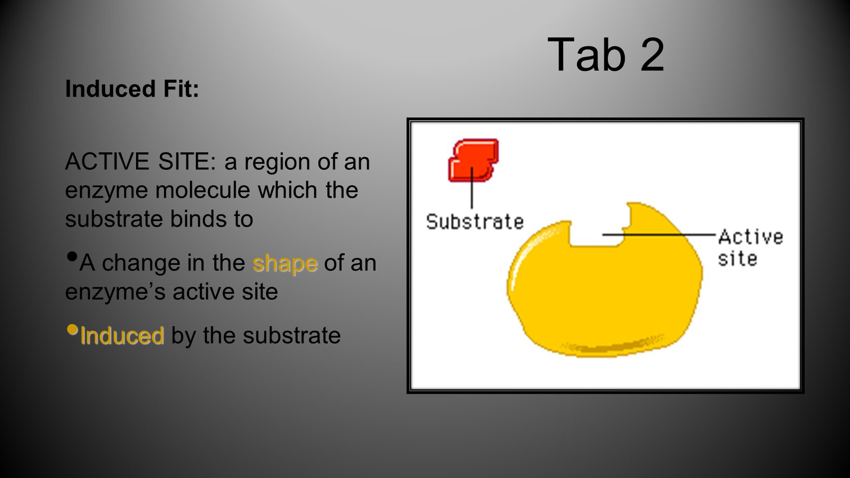 Tab 2 Induced Fit: ACTIVE SITE: a region of an enzyme molecule which the substrate binds to shape A change in the shape of an enzyme's active site Induced Induced by the substrate