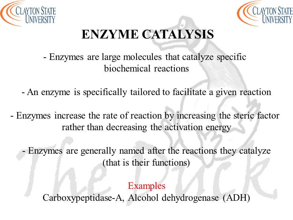 ENZYME CATALYSIS - Enzymes are large molecules that catalyze specific biochemical reactions - An enzyme is specifically tailored to facilitate a given