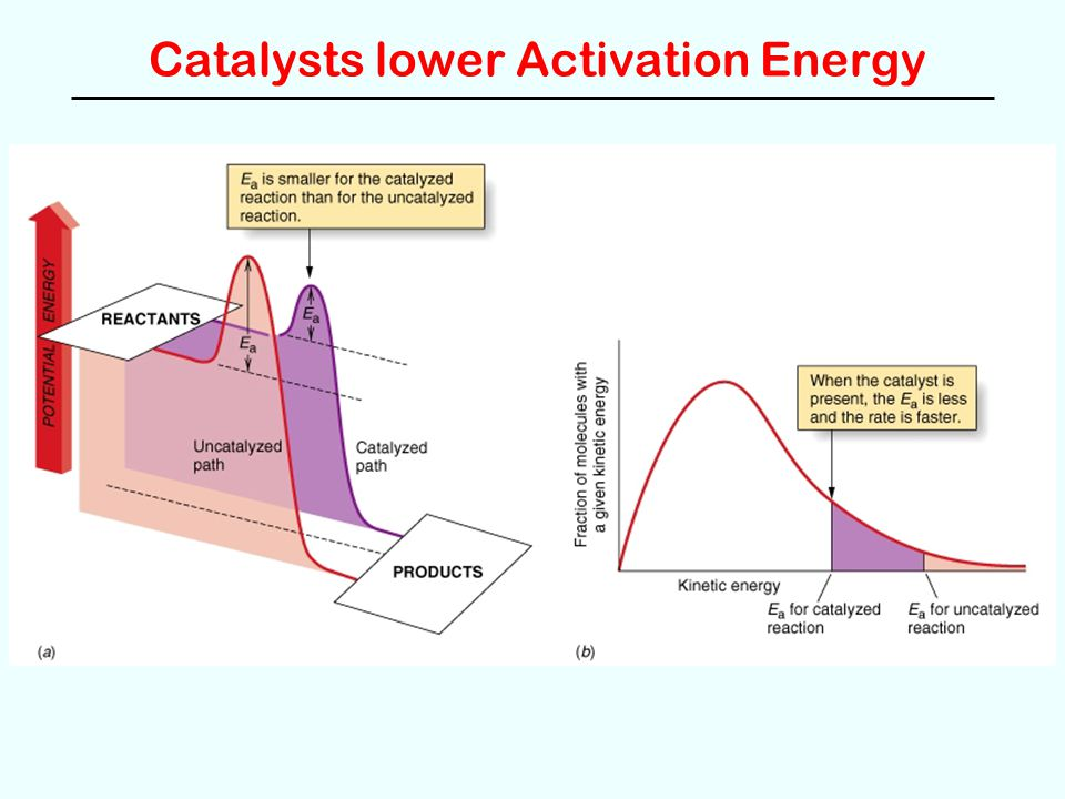 Catalysts lower Activation Energy
