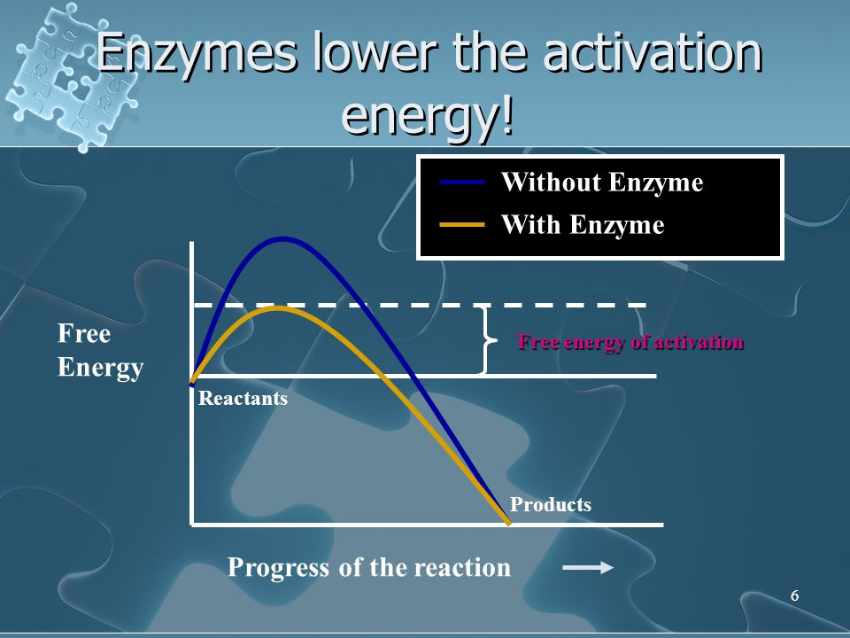 6 Free Energy Progress of the reaction Reactants Products Free energy of activation Without Enzyme With Enzyme Enzymes lower the activation energy!
