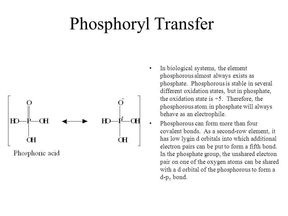 Examples of Phosphoryl Groups in Biochemistry