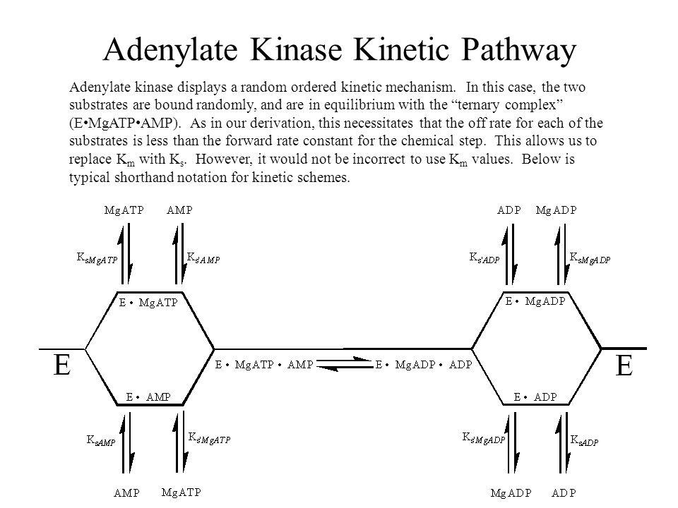 Adenylate Kinase Kinetic Pathway Adenylate kinase displays a random ordered kinetic mechanism.