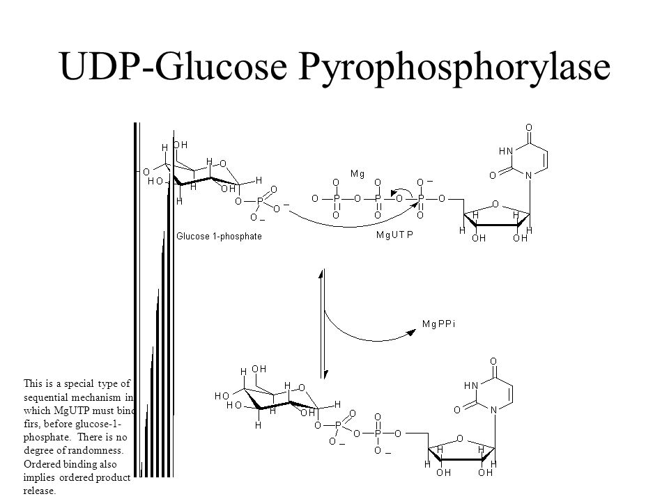 UDP-Glucose Pyrophosphorylase This is a special type of sequential mechanism in which MgUTP must bind firs, before glucose-1- phosphate.