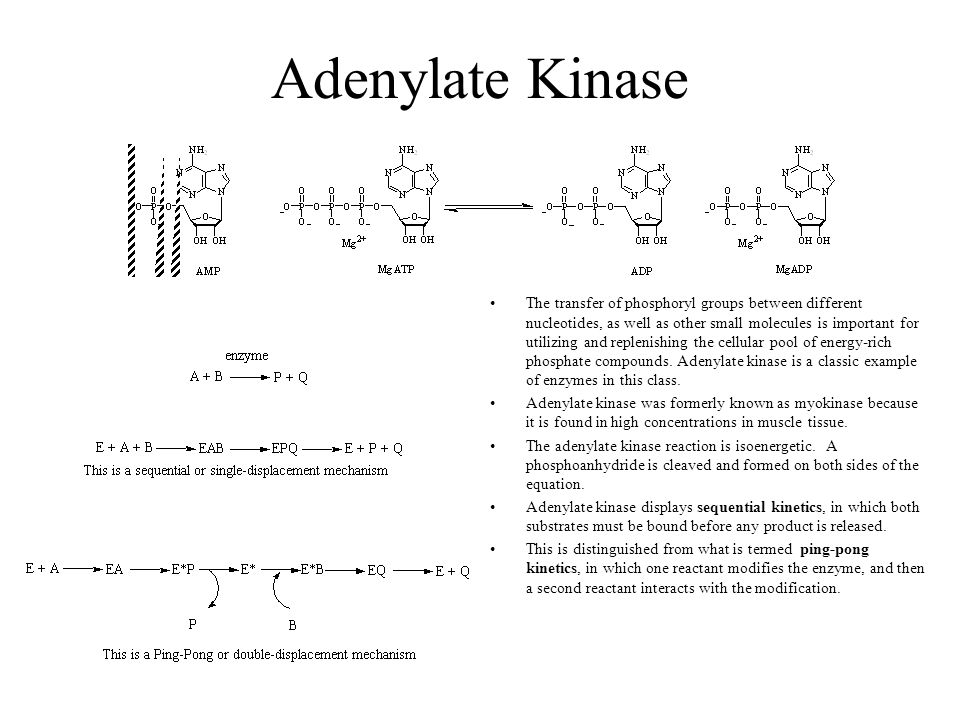 Bi-substrate Enzyme Kinetics Sequential 1. ordered 2. random Ping-pong