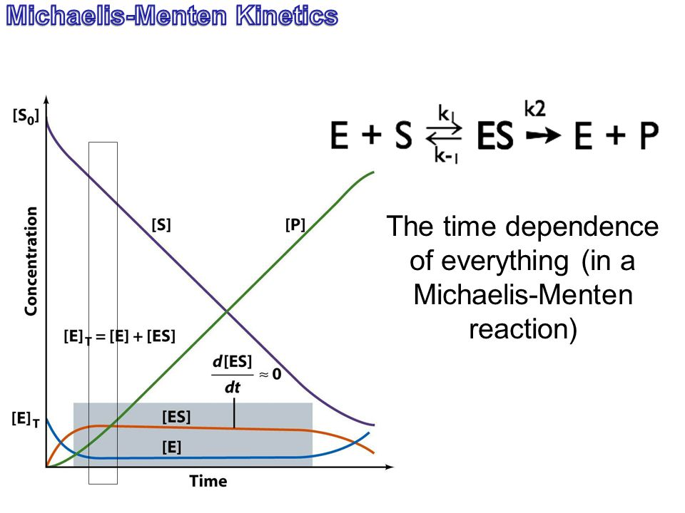 The time dependence of everything (in a Michaelis-Menten reaction)