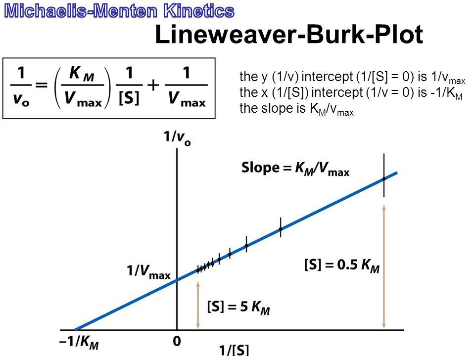 Lineweaver-Burk-Plot the y (1/v) intercept (1/[S] = 0) is 1/v max the x (1/[S]) intercept (1/v = 0) is -1/K M the slope is K M /v max
