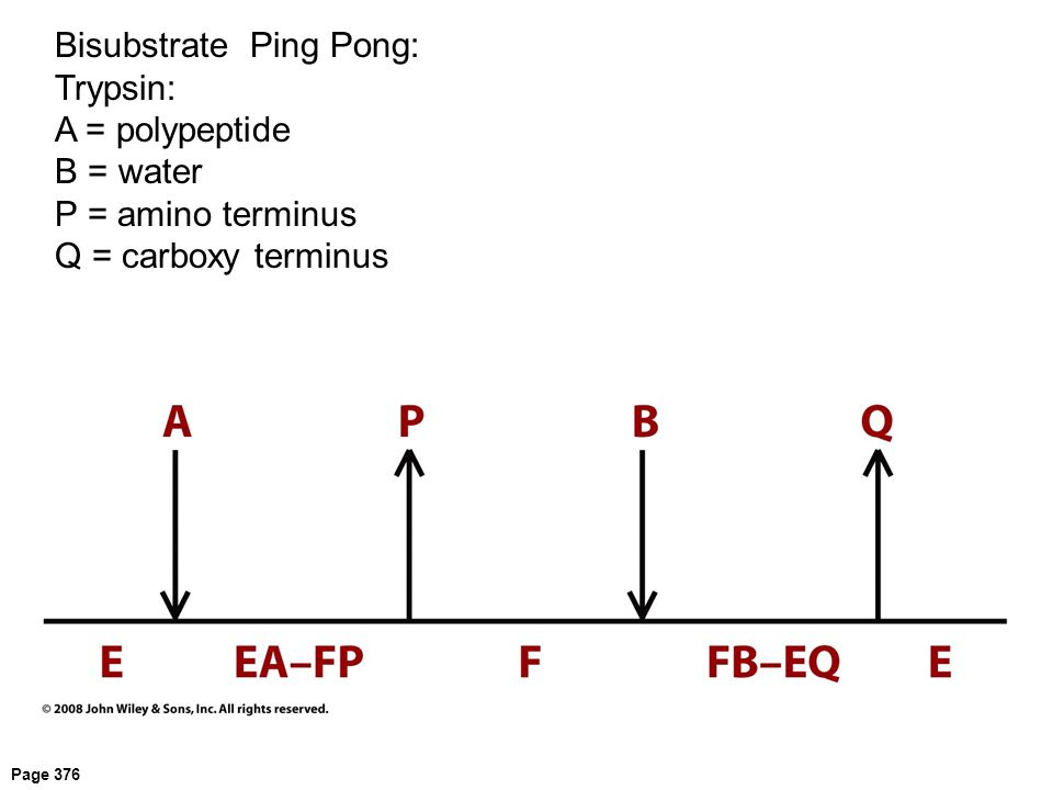 Page 376 Bisubstrate Ping Pong: Trypsin: A = polypeptide B = water P = amino terminus Q = carboxy terminus