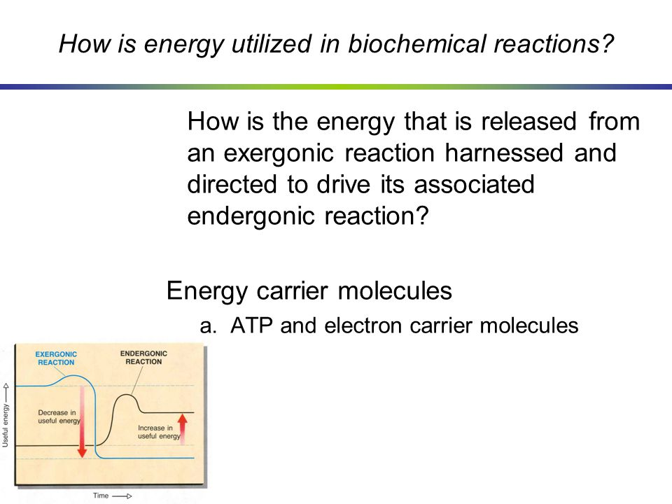 How is energy utilized in biochemical reactions? How is the energy that is released from an exergonic reaction harnessed and directed to drive its ass