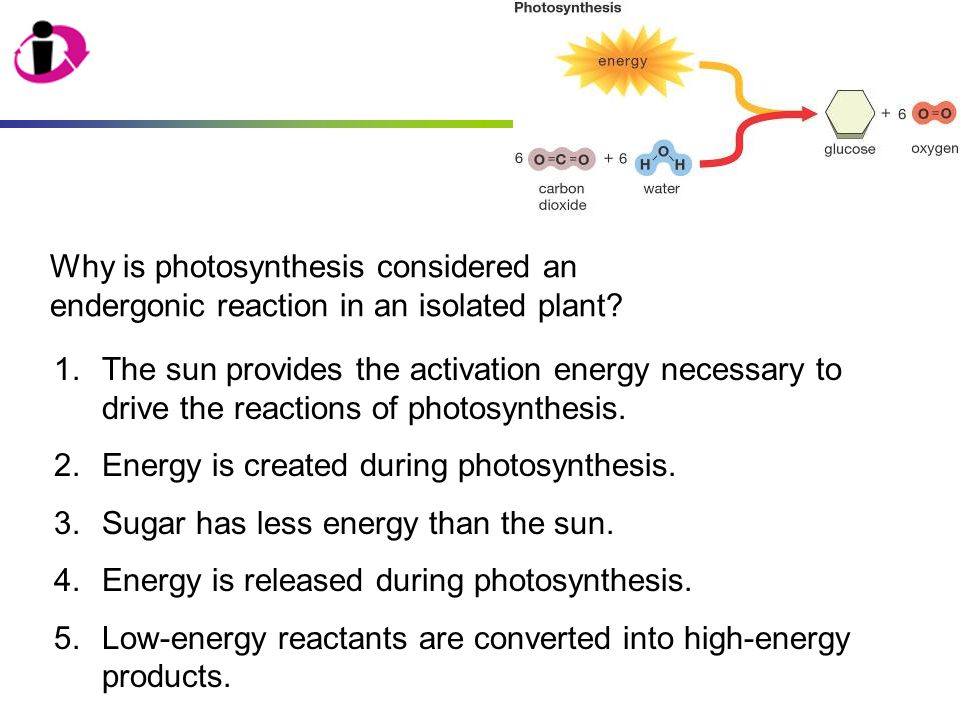 1.The sun provides the activation energy necessary to drive the reactions of photosynthesis. 2.Energy is created during photosynthesis. 3.Sugar has le