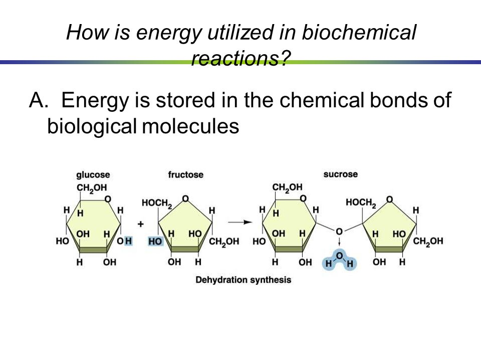 How is energy utilized in biochemical reactions? A. Energy is stored in the chemical bonds of biological molecules