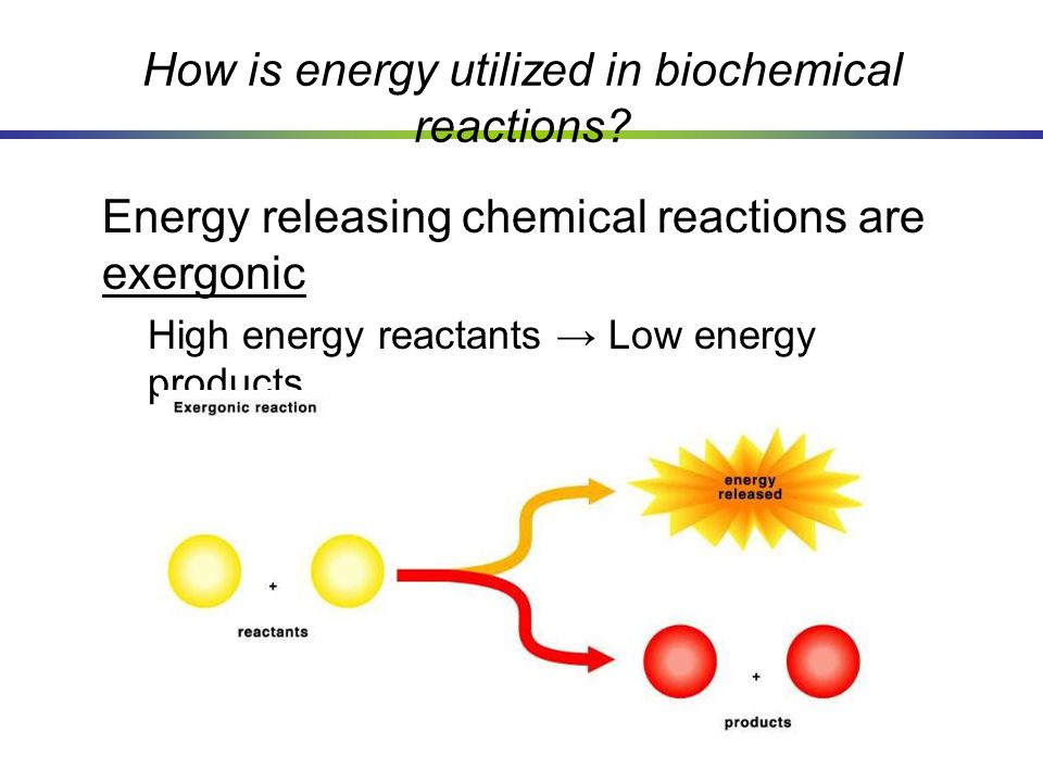 How is energy utilized in biochemical reactions? Energy releasing chemical reactions are exergonic High energy reactants → Low energy products