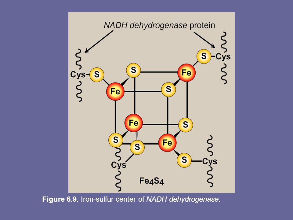 Figure 6.9. Iron-sulfur center of NADH dehydrogenase.
