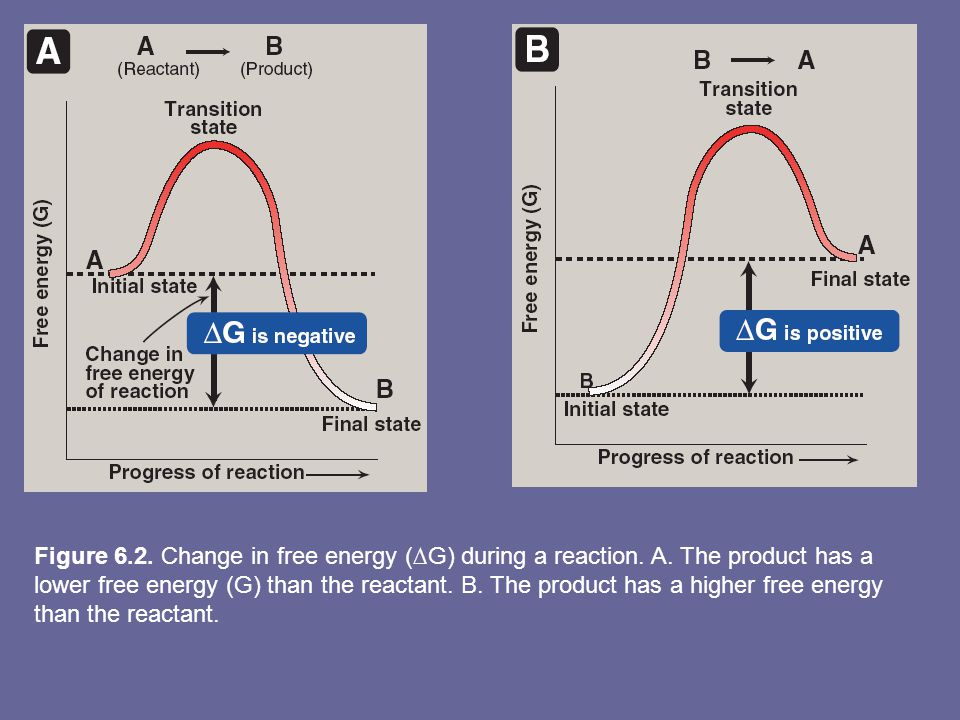 Figure 6.2. Change in free energy (∆G) during a reaction. A. The product has a lower free energy (G) than the reactant. B. The product has a higher fr
