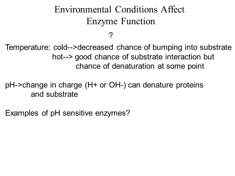 Environmental Conditions Affect Enzyme Function ? Temperature: cold-->decreased chance of bumping into substrate hot--> good chance of substrate inter