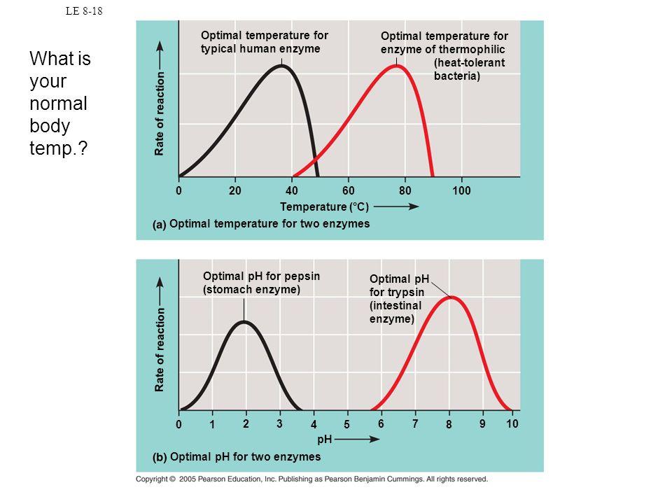 LE 8-18 Optimal temperature for typical human enzyme Optimal temperature for enzyme of thermophilic (heat-tolerant bacteria) Temperature (°C) Optimal