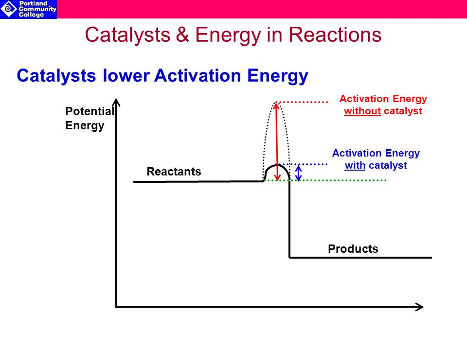 Catalysts & Energy in Reactions Potential Energy Reactants Products Activation Energy with catalyst Catalysts lower Activation Energy Activation Energy without catalyst