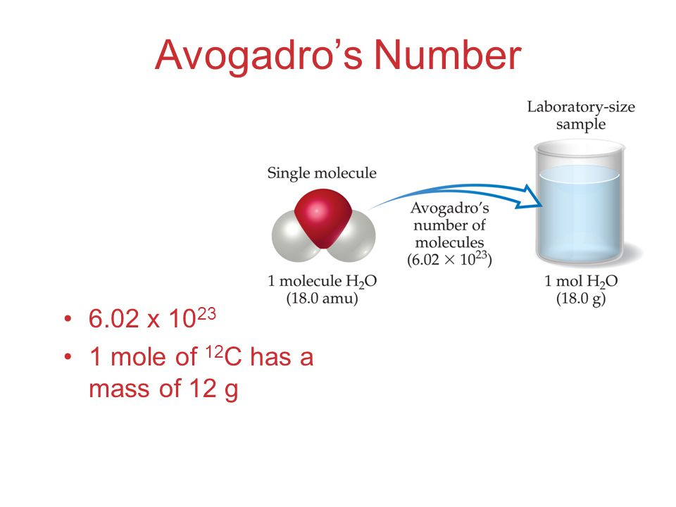 Avogadro's Number 6.02 x 10 23 1 mole of 12 C has a mass of 12 g
