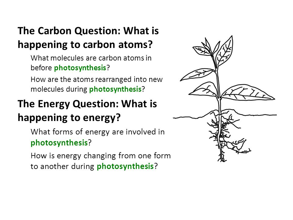 The Carbon Question: What is happening to carbon atoms.