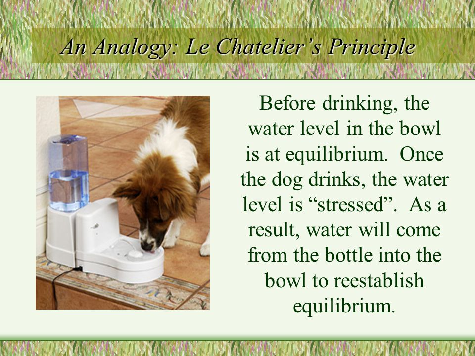 """An Analogy: Le Chatelier's Principle Before drinking, the water level in the bowl is at equilibrium. Once the dog drinks, the water level is """"stressed"""