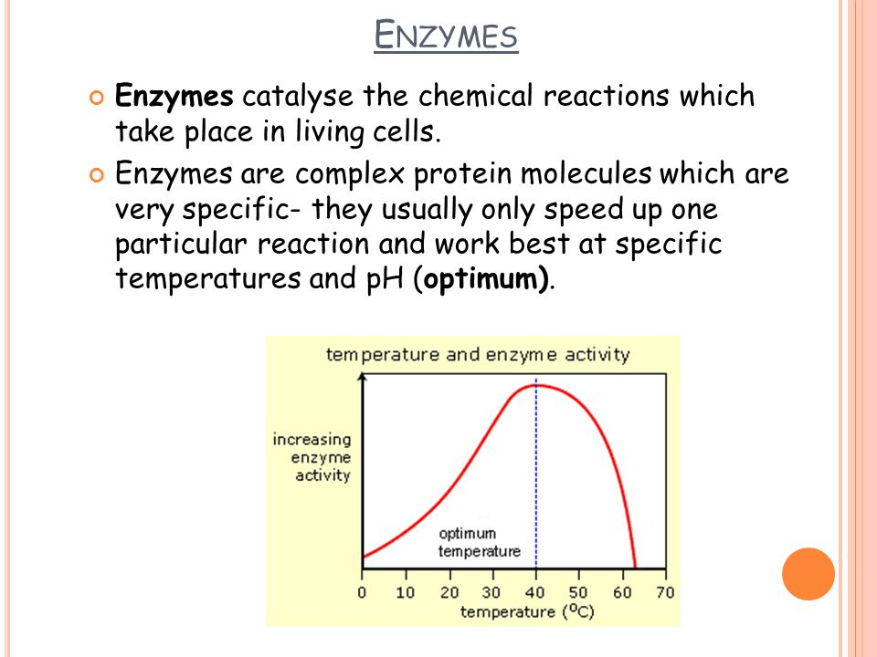 E NZYMES Enzymes catalyse the chemical reactions which take place in living cells. Enzymes are complex protein molecules which are very specific- they