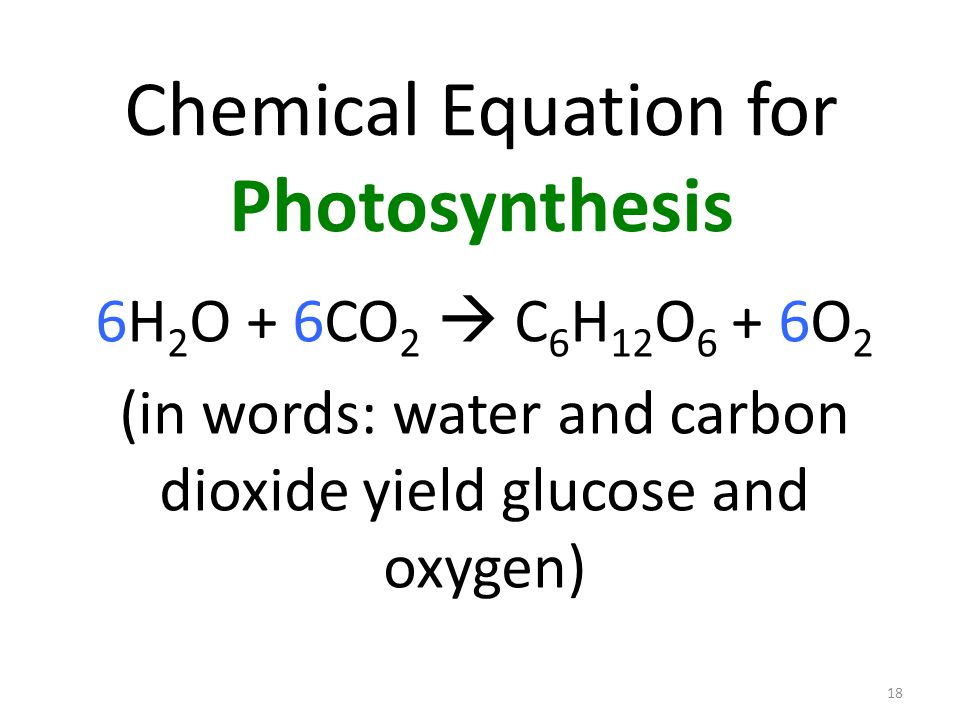18 Chemical Equation for Photosynthesis 6H 2 O + 6CO 2  C 6 H 12 O 6 + 6O 2 (in words: water and carbon dioxide yield glucose and oxygen)