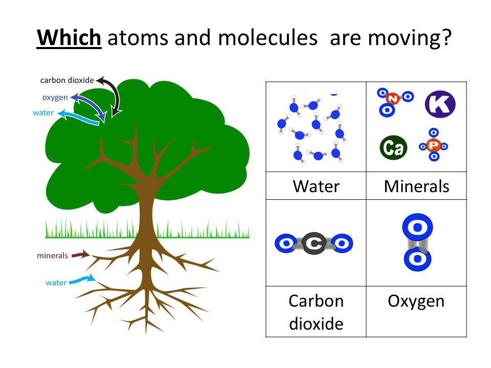 Which atoms and molecules are moving WaterMinerals Carbon dioxide Oxygen