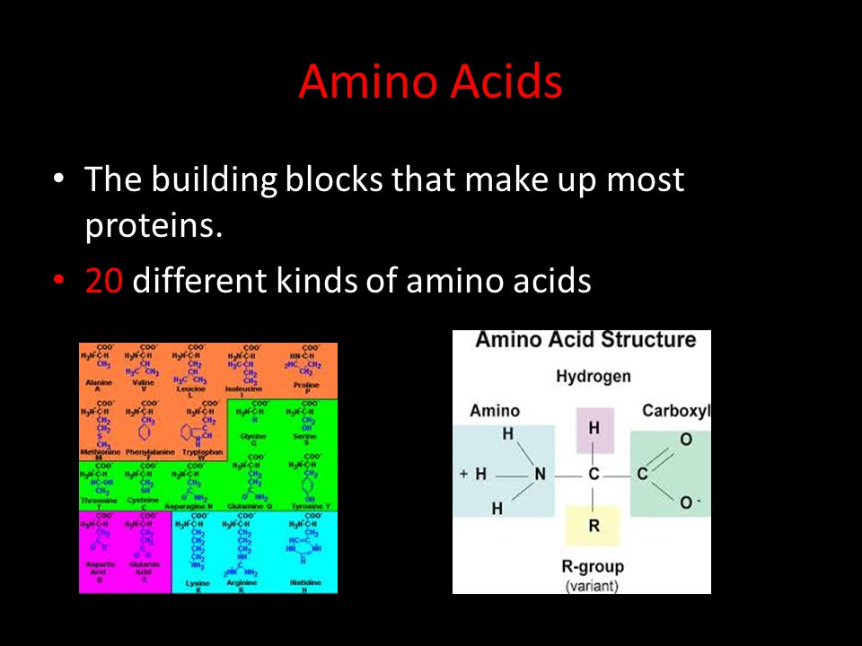 Amino Acids The building blocks that make up most proteins. 20 different kinds of amino acids