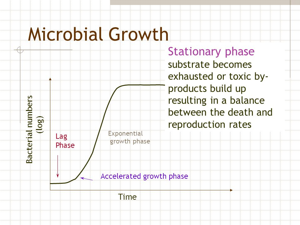 Bacterial numbers (log) Time Lag Phase Accelerated growth phase Exponential growth phase Microbial Growth Stationary phase substrate becomes exhausted
