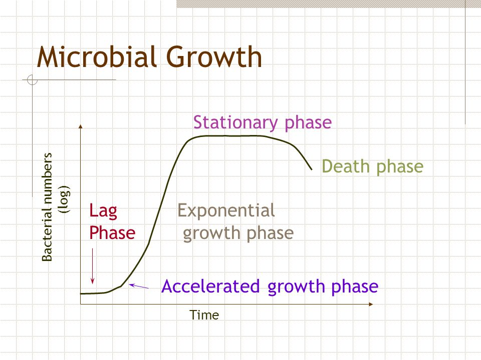 Bacterial numbers (log) Time Lag Phase Accelerated growth phase Exponential growth phase Stationary phase Death phase Microbial Growth
