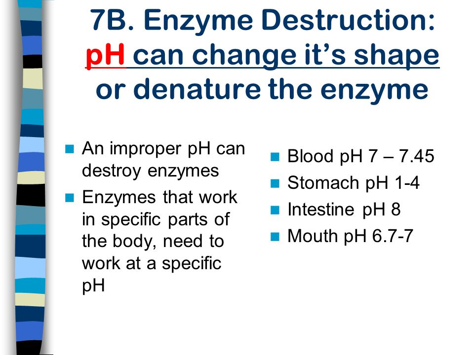 7B. Enzyme Destruction: pH can change it's shape or denature the enzyme Blood pH 7 – 7.45 Stomach pH 1-4 Intestine pH 8 Mouth pH 6.7-7 An improper pH