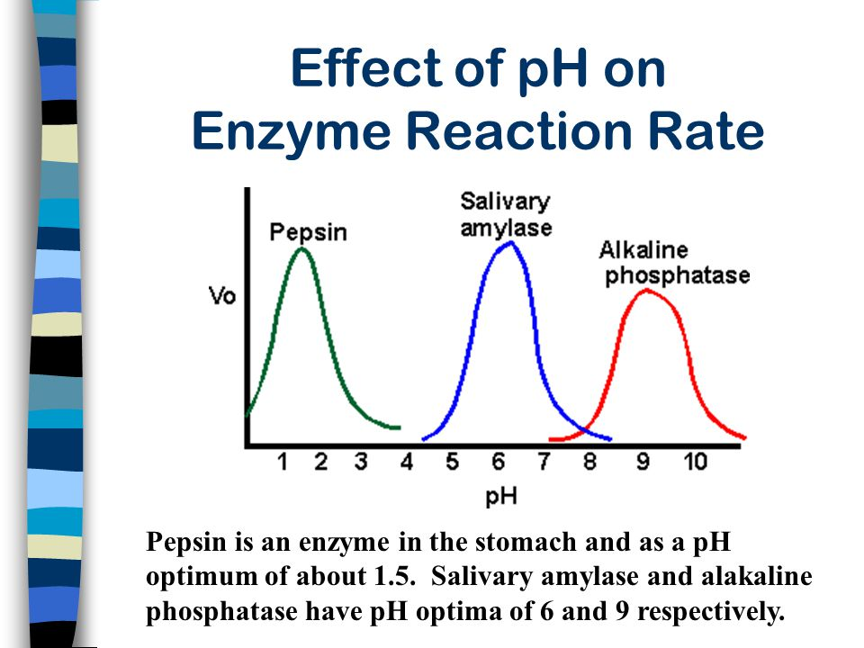 Effect of pH on Enzyme Reaction Rate Pepsin is an enzyme in the stomach and as a pH optimum of about 1.5. Salivary amylase and alakaline phosphatase h