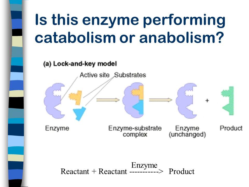 Reactant + Reactant -----------> Product Enzyme