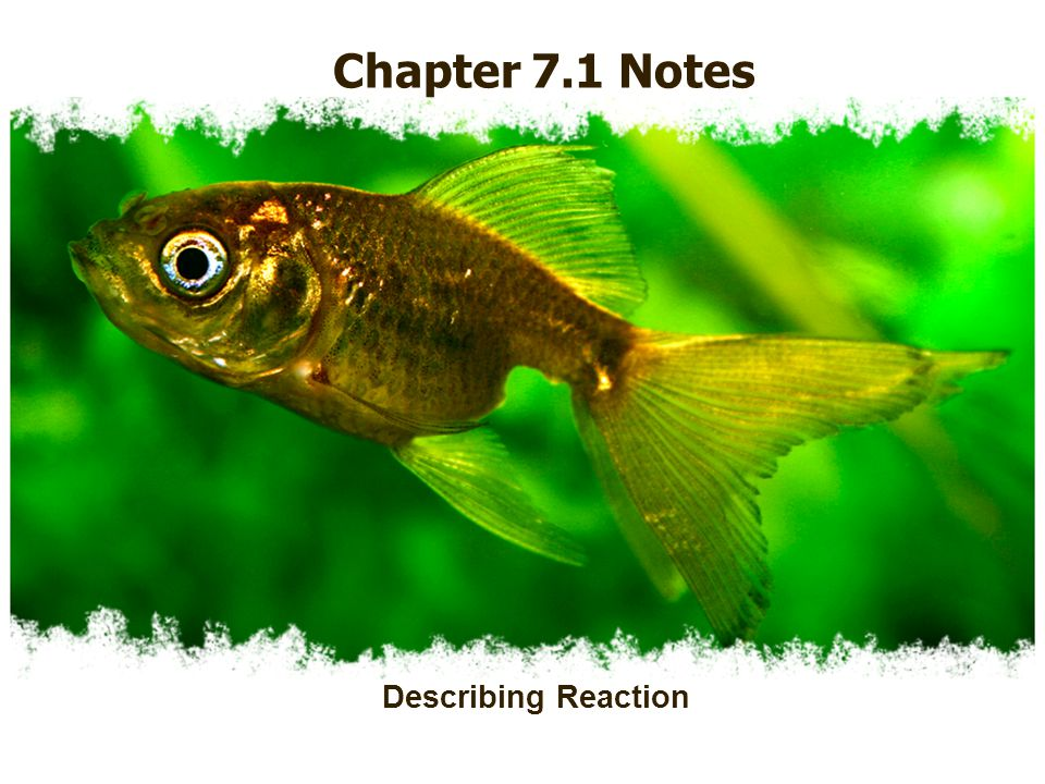 Chapter 7.1 Notes Describing Reaction