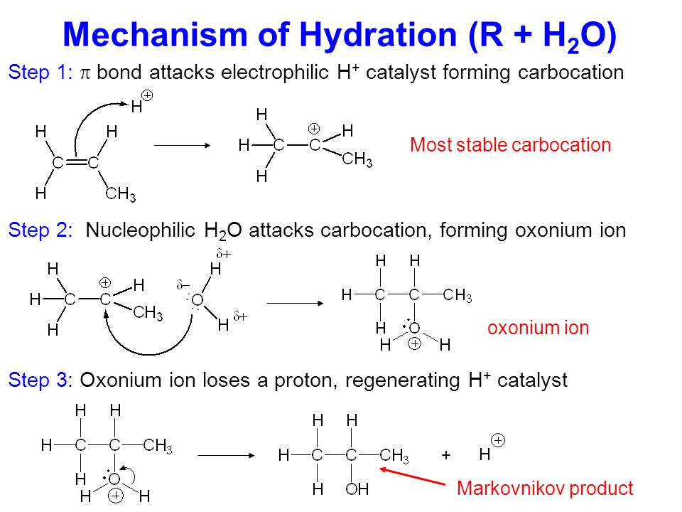 Remember: Markovnikov's rule says that the H (from H 2 O) will bond to the alkene C with the most H's Hydration Predict the product of the following hydration reaction + H 2 O OR Markovnikov Product Anti-Markovnikov Product