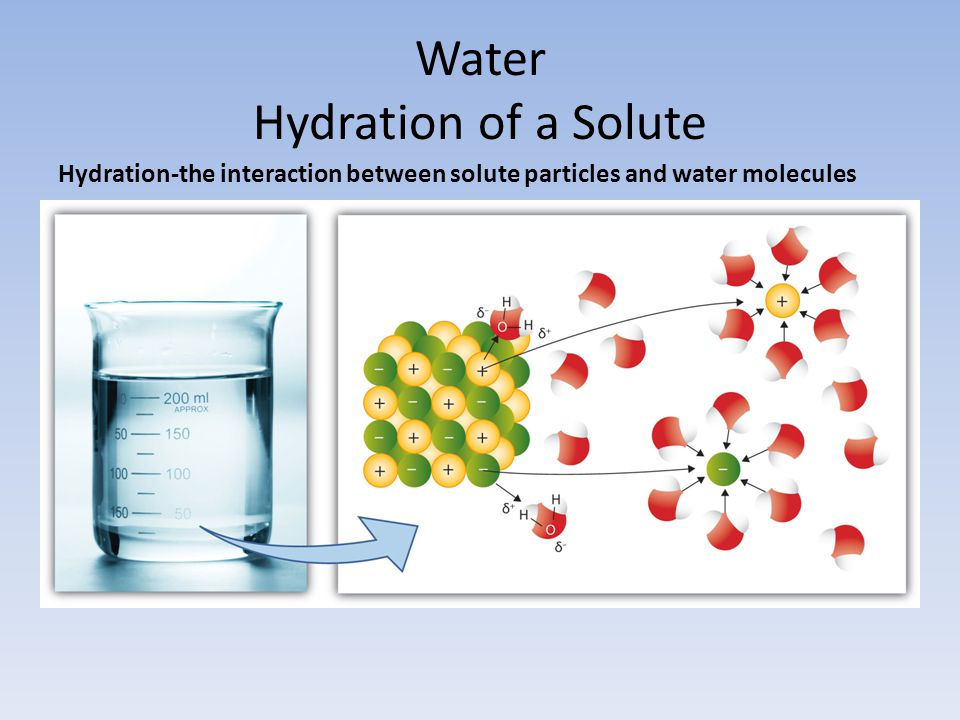 Water Hydration of a Solute Hydration-the interaction between solute particles and water molecules