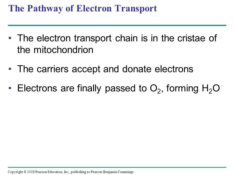 The Pathway of Electron Transport The electron transport chain is in the cristae of the mitochondrion The carriers accept and donate electrons Electro