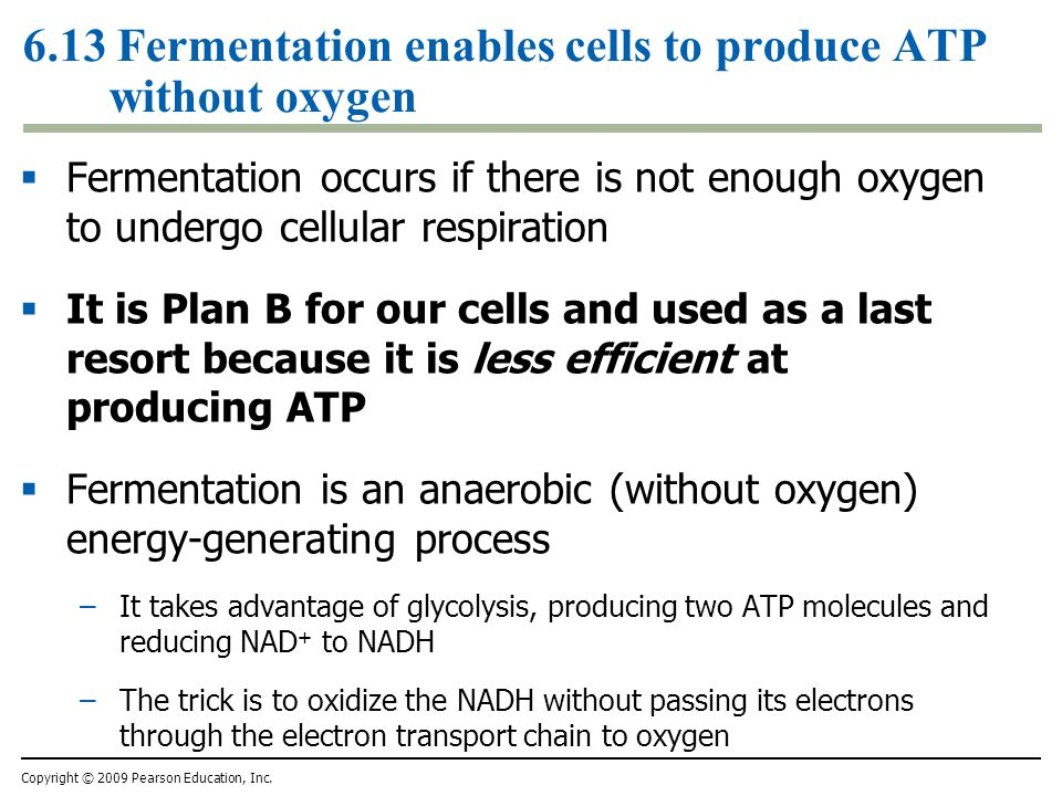 6.13 Fermentation enables cells to produce ATP without oxygen  Fermentation occurs if there is not enough oxygen to undergo cellular respiration  It