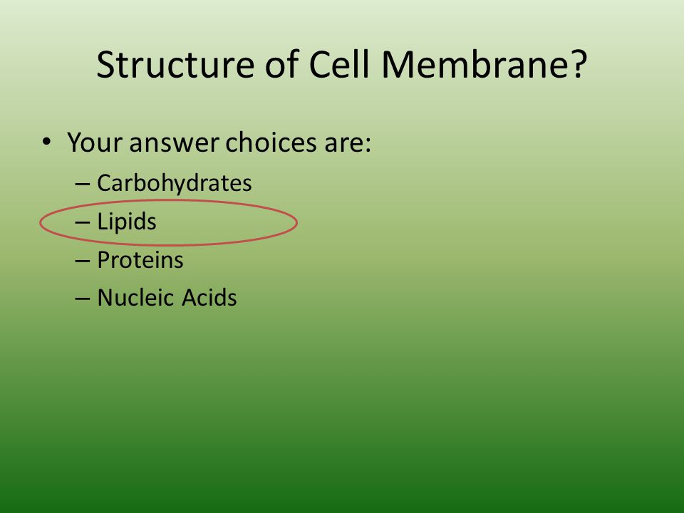 Structure of Cell Membrane.