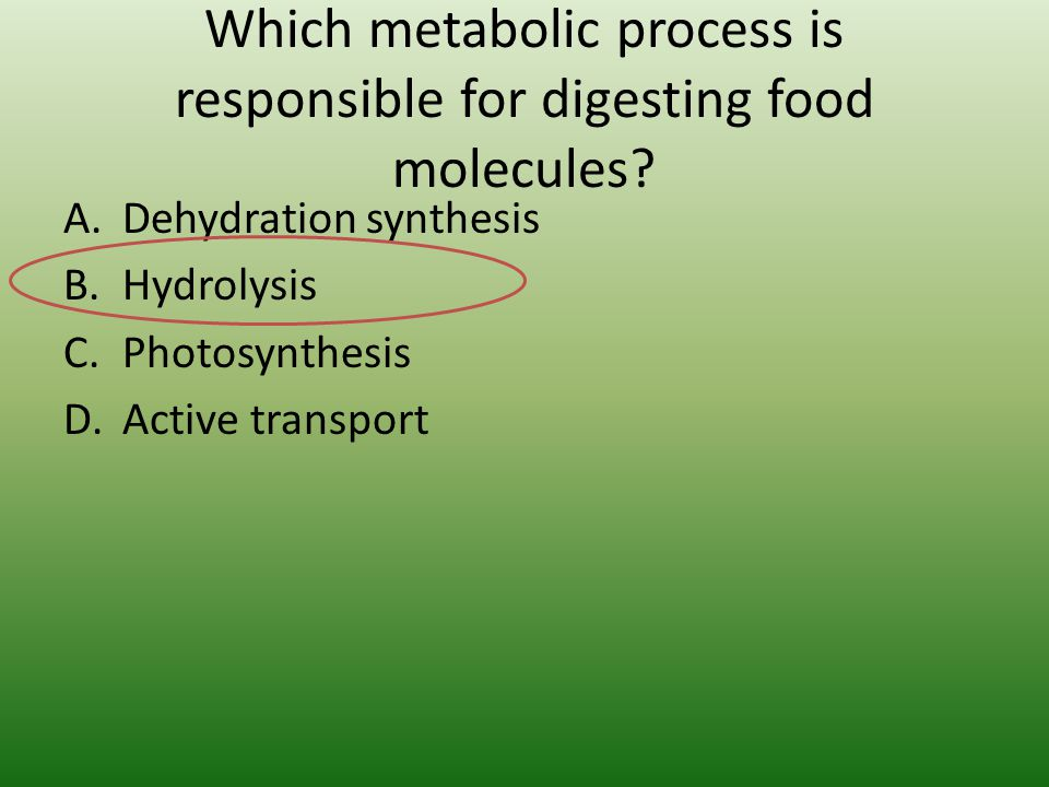 Which metabolic process is responsible for digesting food molecules.