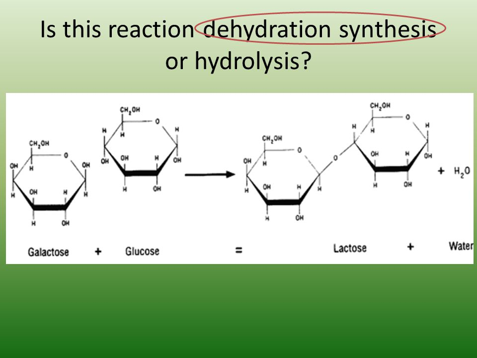 Is this reaction dehydration synthesis or hydrolysis?