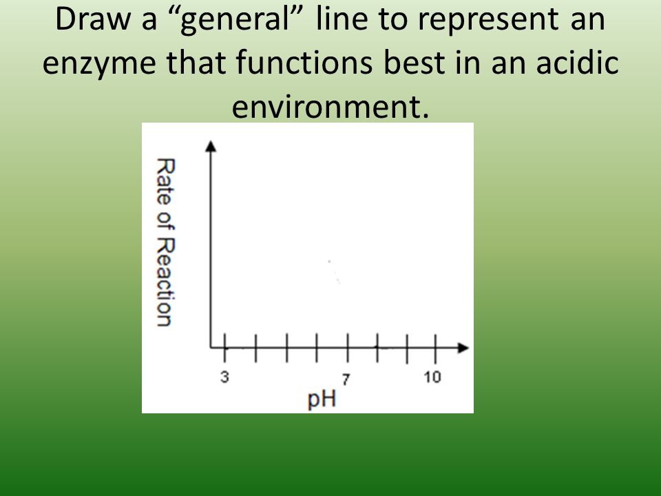 Draw a general line to represent an enzyme that functions best in an acidic environment.