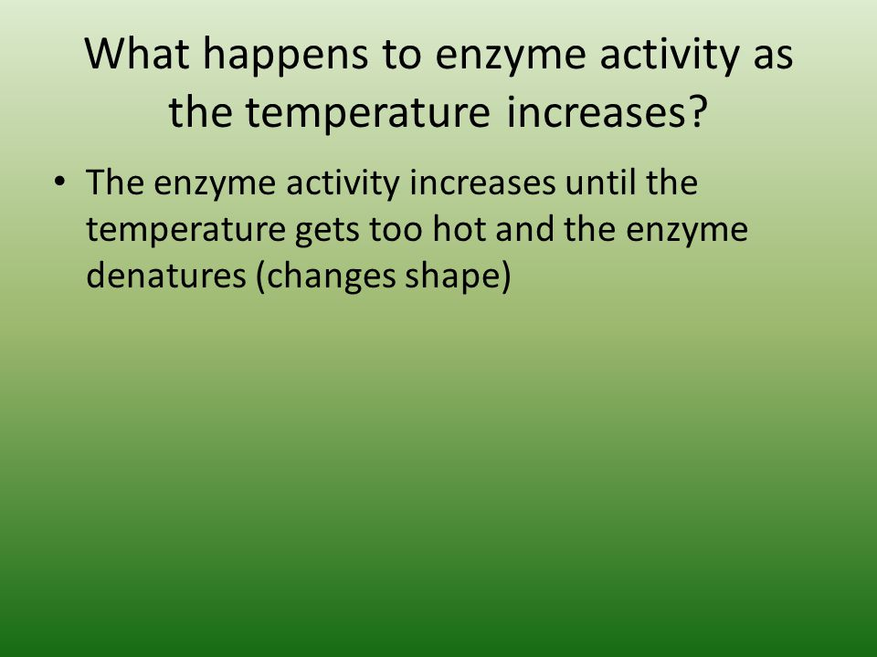 What happens to enzyme activity as the temperature increases.