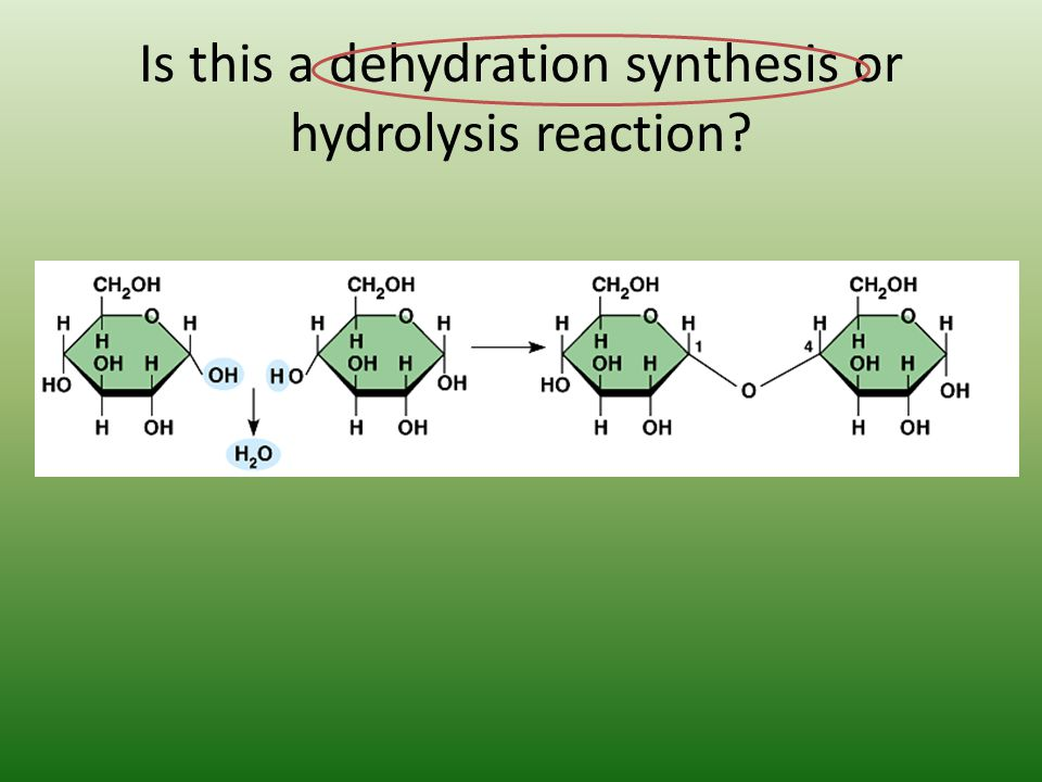 Is this a dehydration synthesis or hydrolysis reaction?