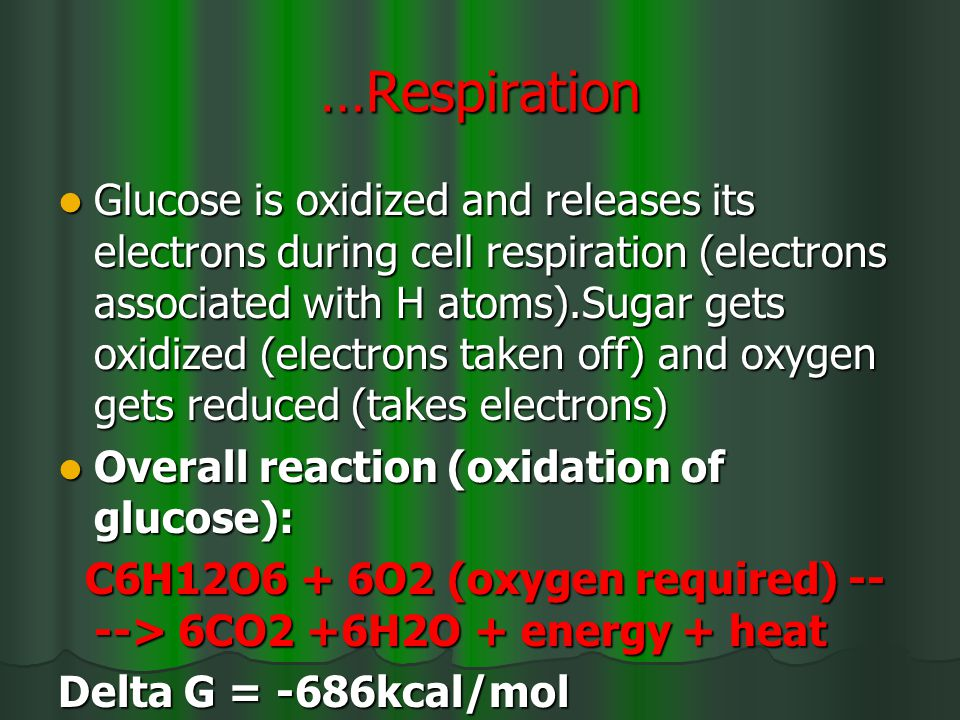 …Respiration Glucose is oxidized and releases its electrons during cell respiration (electrons associated with H atoms).Sugar gets oxidized (electrons taken off) and oxygen gets reduced (takes electrons) Glucose is oxidized and releases its electrons during cell respiration (electrons associated with H atoms).Sugar gets oxidized (electrons taken off) and oxygen gets reduced (takes electrons) Overall reaction (oxidation of glucose): Overall reaction (oxidation of glucose): C6H12O6 + 6O2 (oxygen required) -- --> 6CO2 +6H2O + energy + heat C6H12O6 + 6O2 (oxygen required) -- --> 6CO2 +6H2O + energy + heat Delta G = -686kcal/mol