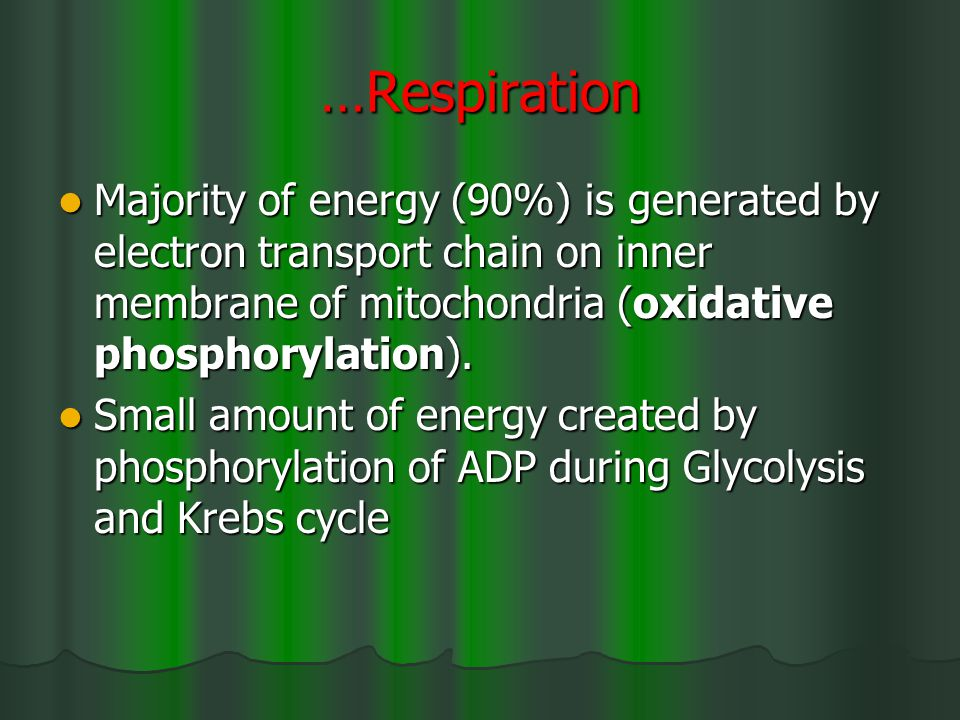 …Respiration Majority of energy (90%) is generated by electron transport chain on inner membrane of mitochondria (oxidative phosphorylation).
