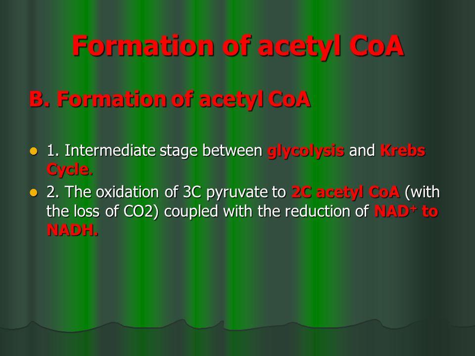 Formation of acetyl CoA B. Formation of acetyl CoA B.