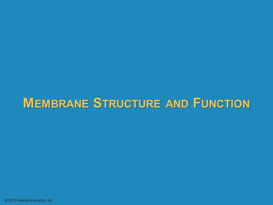 Membranes are fluid mosaics of lipids and proteins with many functions Biologists use the fluid mosaic model to describe a membrane's structure, a patchwork of diverse protein molecules embedded in a phospholipid bilayer.